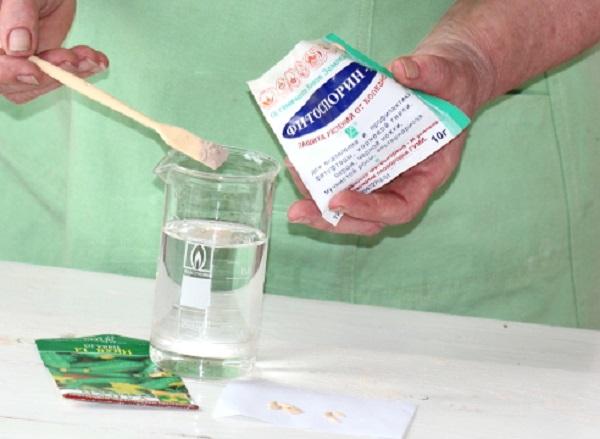 Обработка семян в растворе Фитоспорина-М