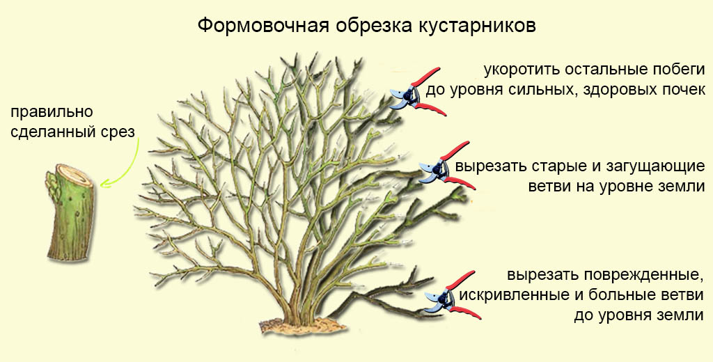 Обрезка кустарников