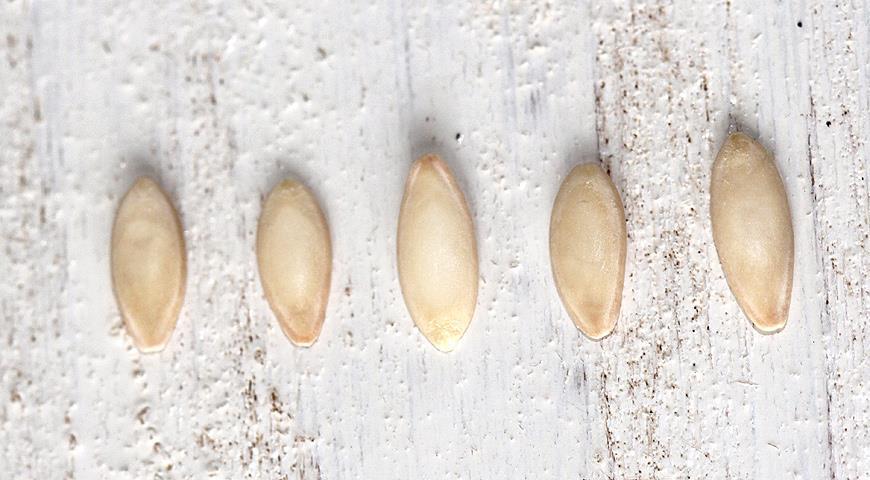 Общие рекомендации по выбору семян огурцов