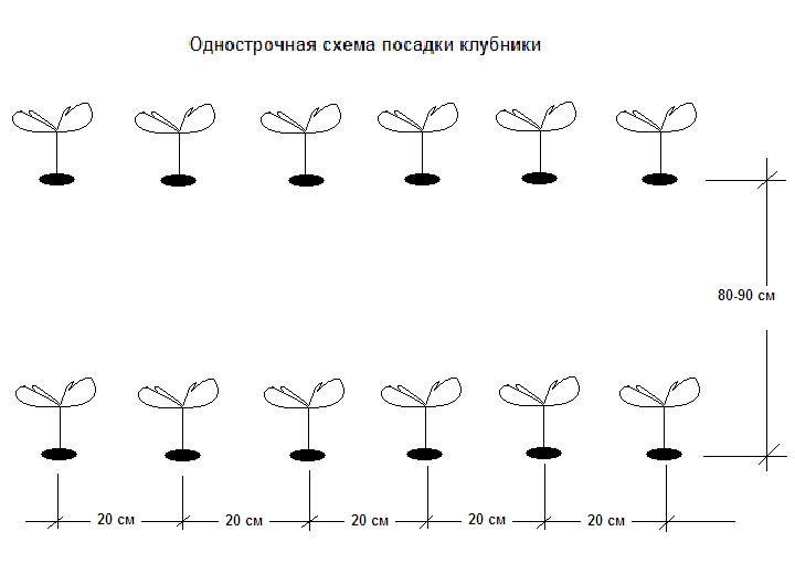 Однострочная схема посадки клубники