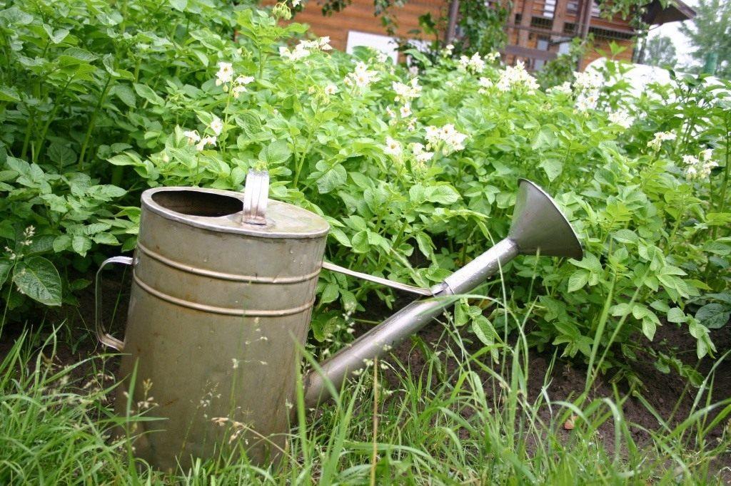Огородные работы в июле