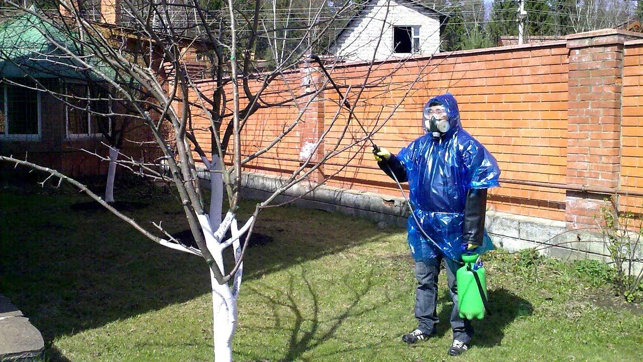 Опрыскивание деревьев мочевиной