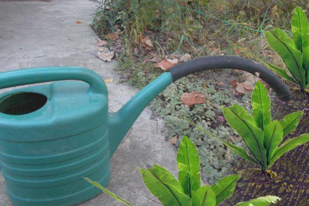 Подкормка растений раствором сульфата калия
