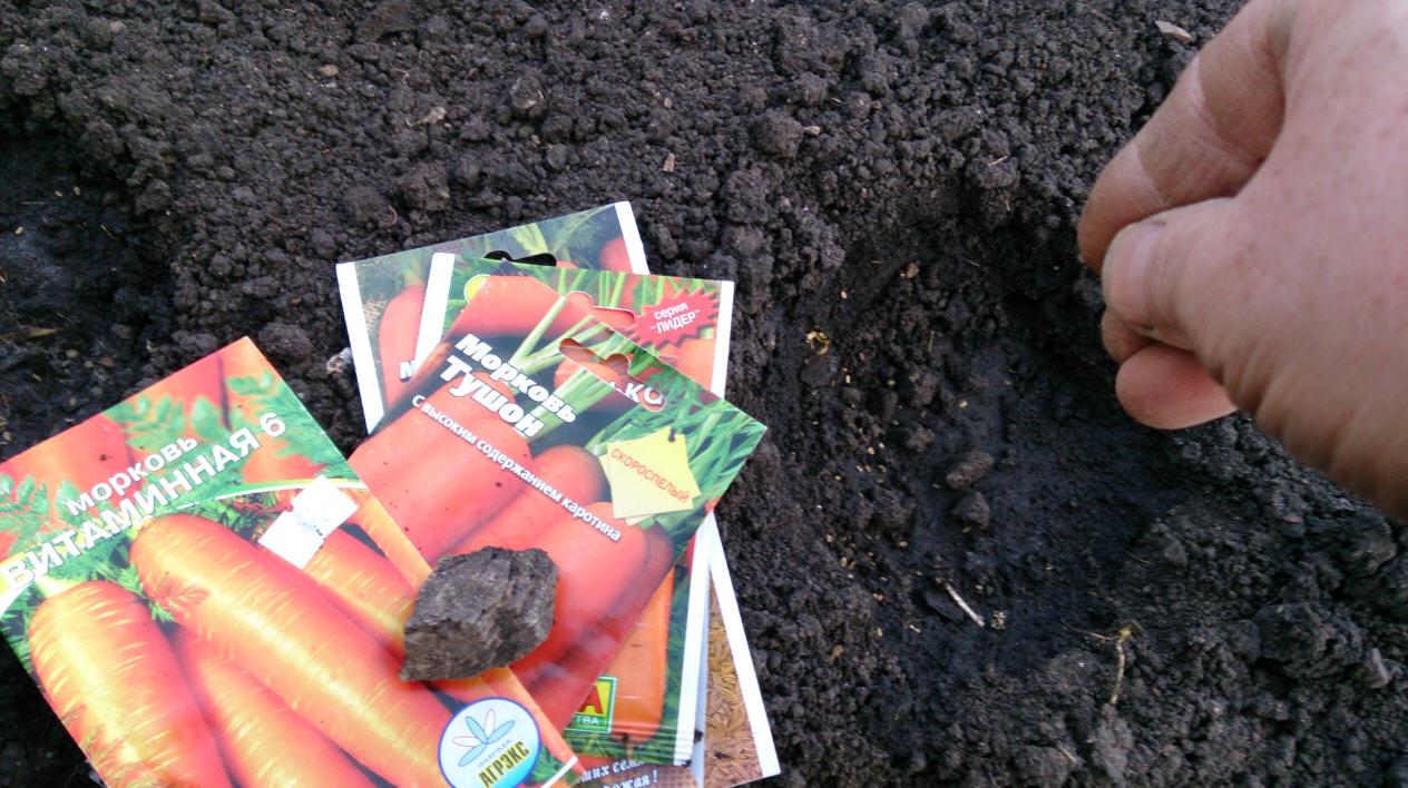 Посев моркови в мае