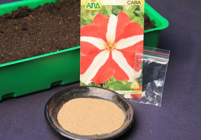 Посев семян петунии с использованием песка