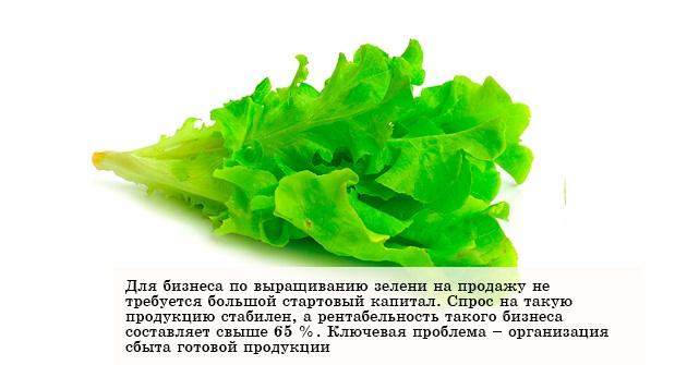 Прибыльный бизнес - выращивание зелени на продажу