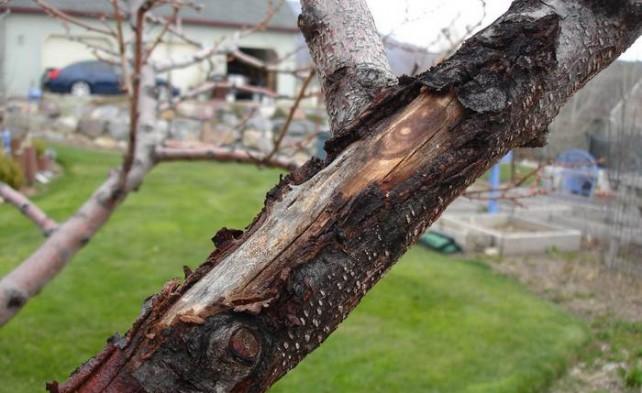 Пример ожогов, которые могут возникнуть в феврале и в начале весны