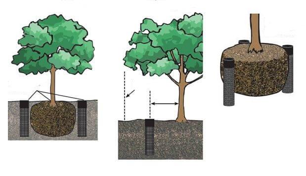 Примеры прикорневой подкормки плодовых деревьев