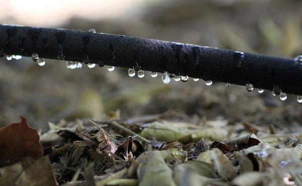 Пример сочащегося шланга для капельного полива