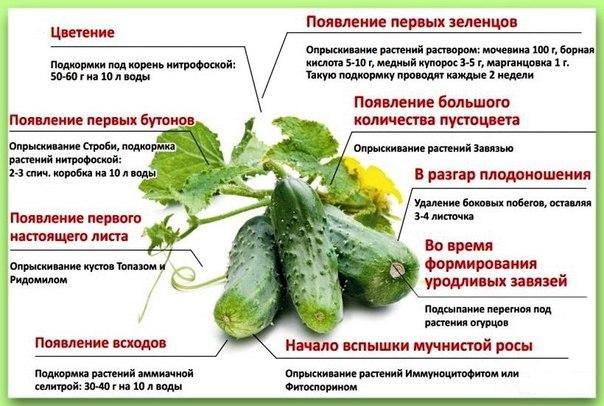 Примерная схема внесения подкормок и профилактика болезней