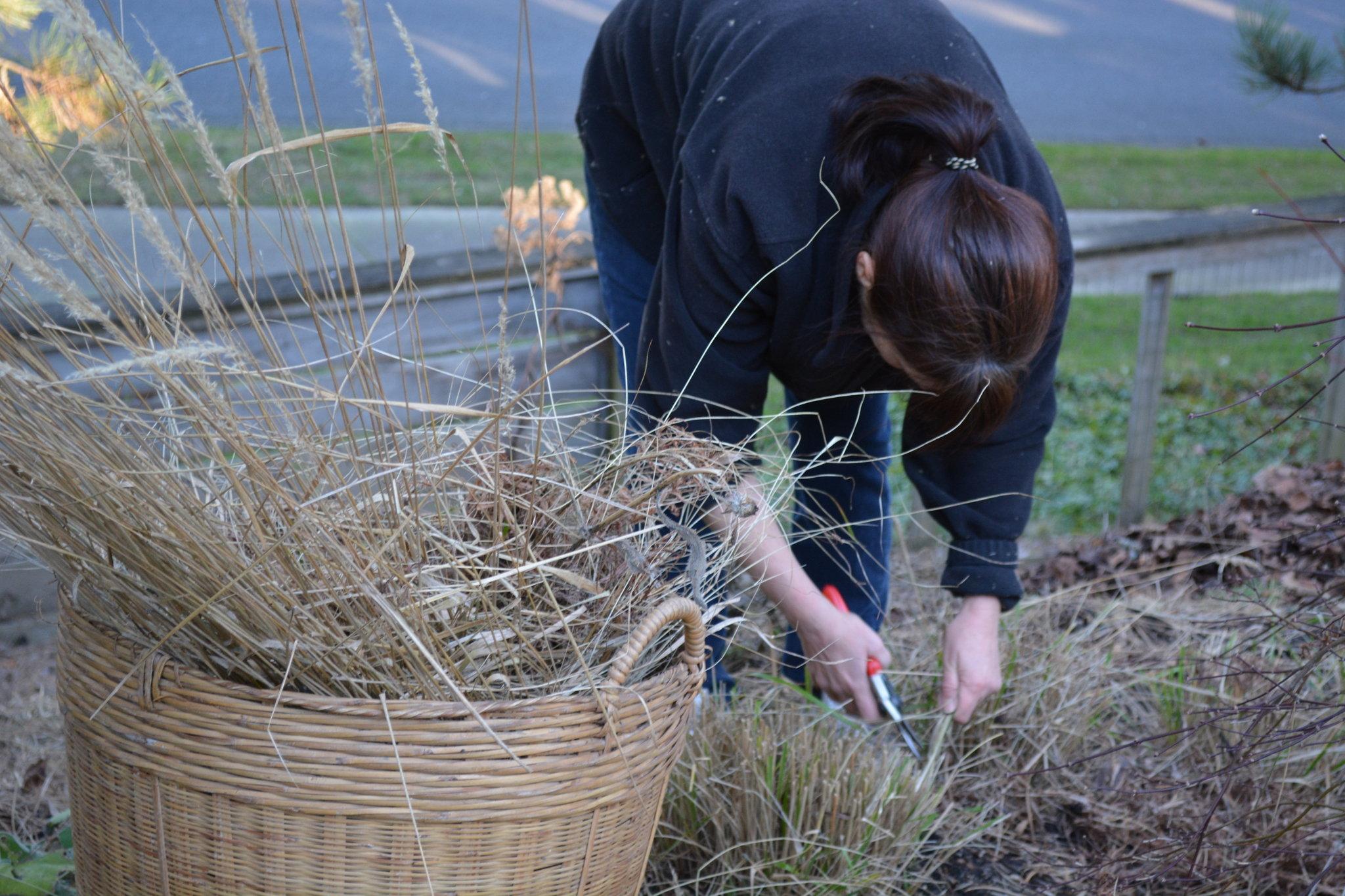 Приступаем к уборке сада от оставшегося садового мусора и сухих растений