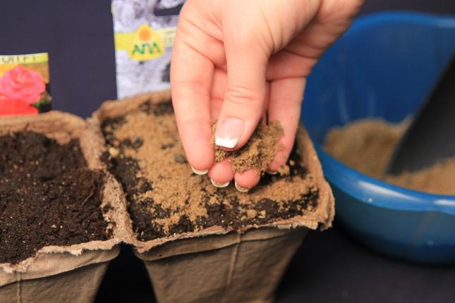 Семена присыпаются песком