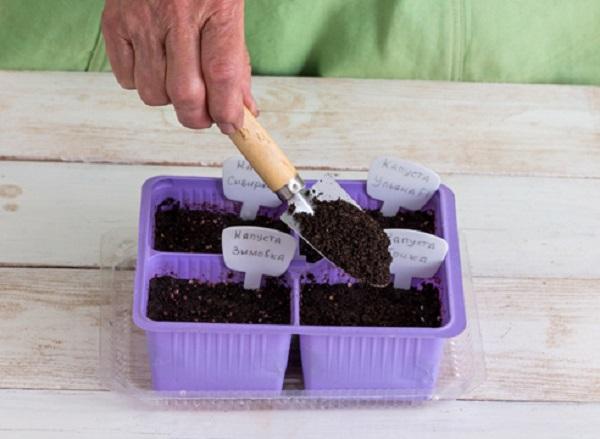 Семена засыпаются почвосмесью