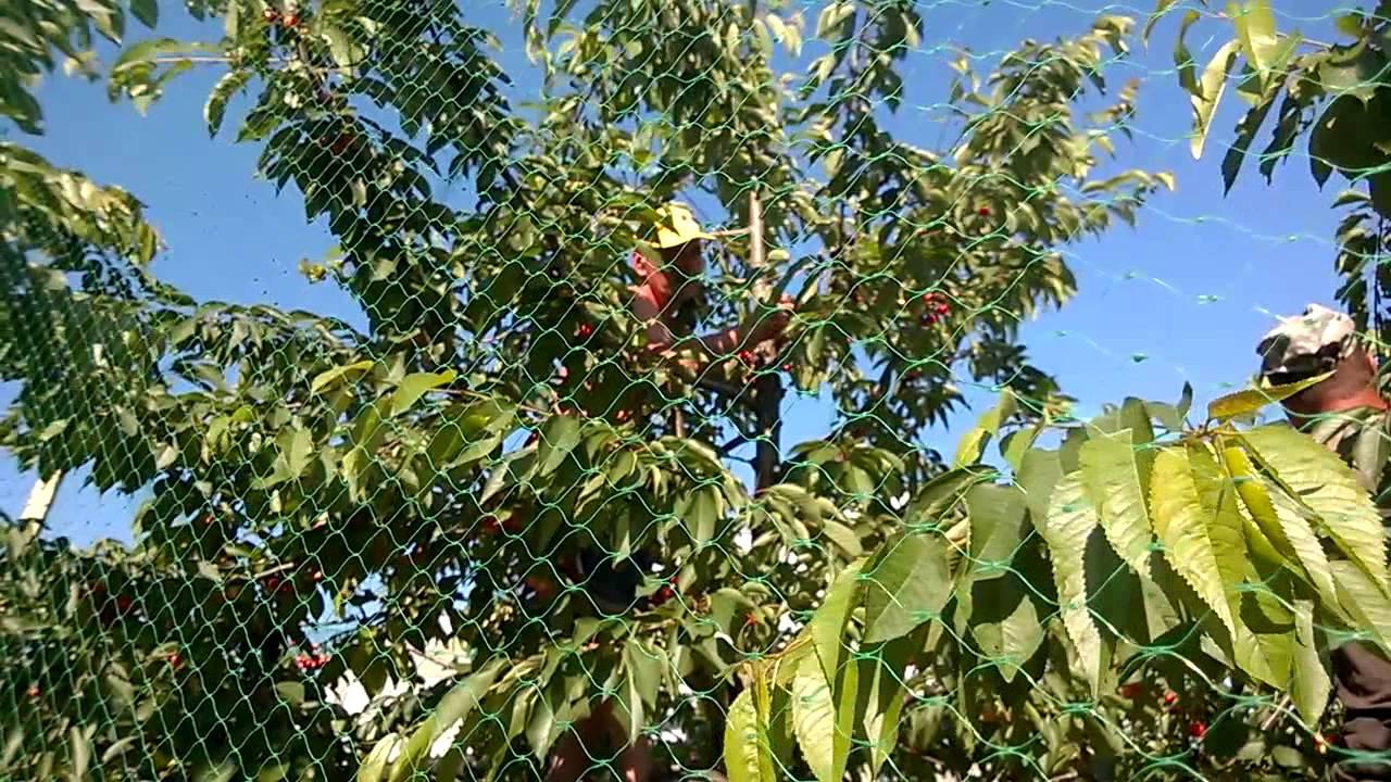 Сетка для защиты деревьев от птиц