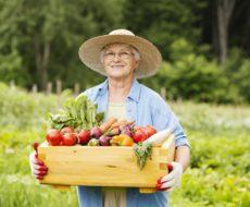 Сезонные работы в саду и огороде - август
