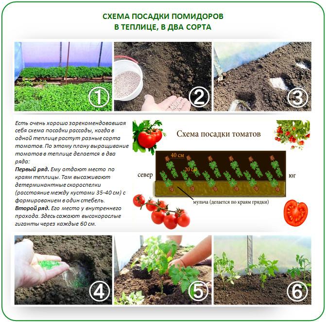 Схема посадки томатов в два сорта