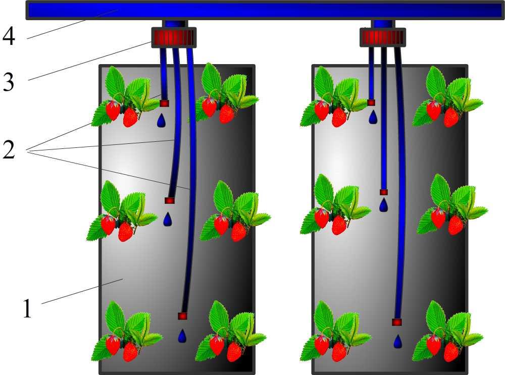 Схема выращивание клубники круглый год в мешках