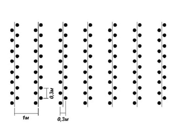 Схема высадки саженцев клубники