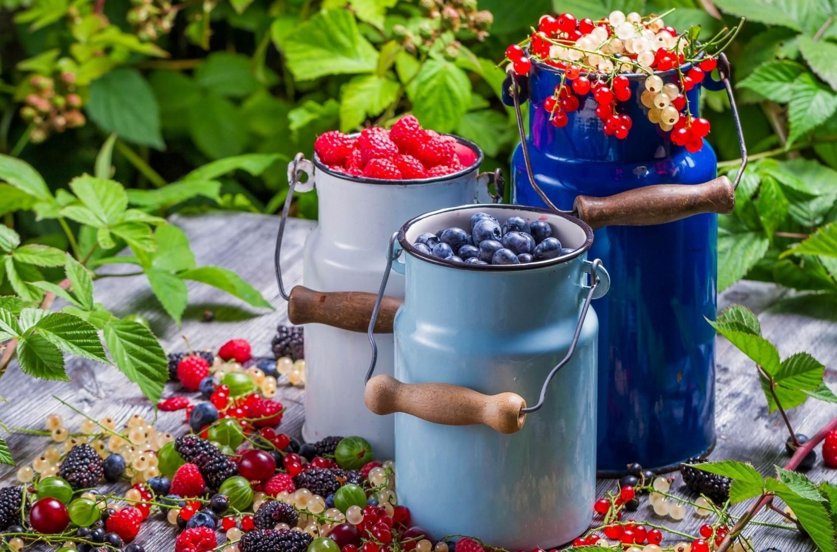 Собирайте созревшую ягоду, чересчур ранний сбор приводит к потере вкусовых качеств, слишком поздний грозит гниением плодов и снижением урожая