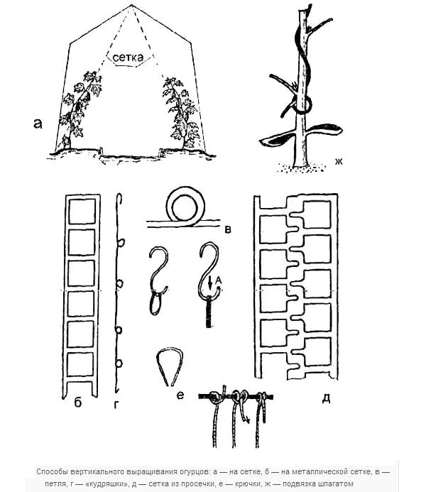 Способы вертикального выращивания огурцов.