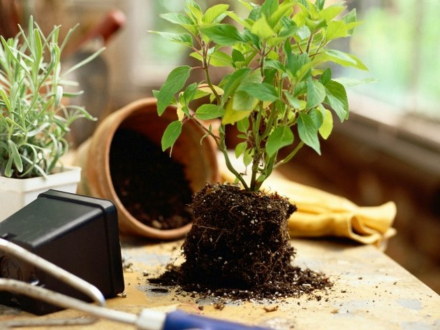 Сульфат калия можно использовать для всех типов почвы