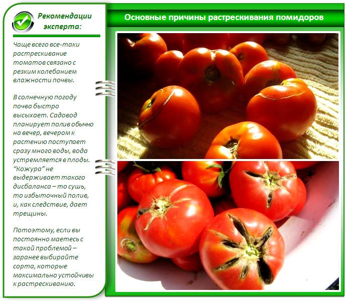 Трещины на помидорах