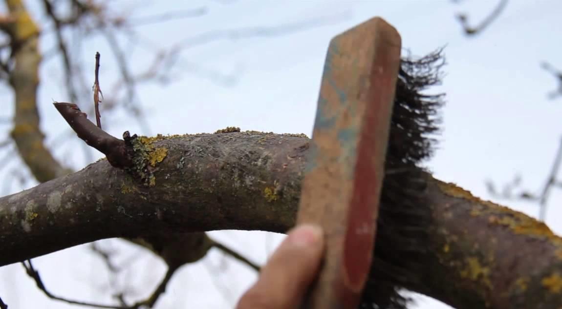 Удаление лишайников щеткой после обработки