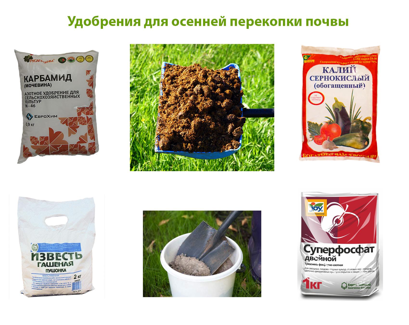 Удобрения для осенней перекопки почвы в огороде