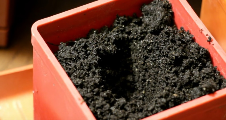 Углубление в почве для высадки семян