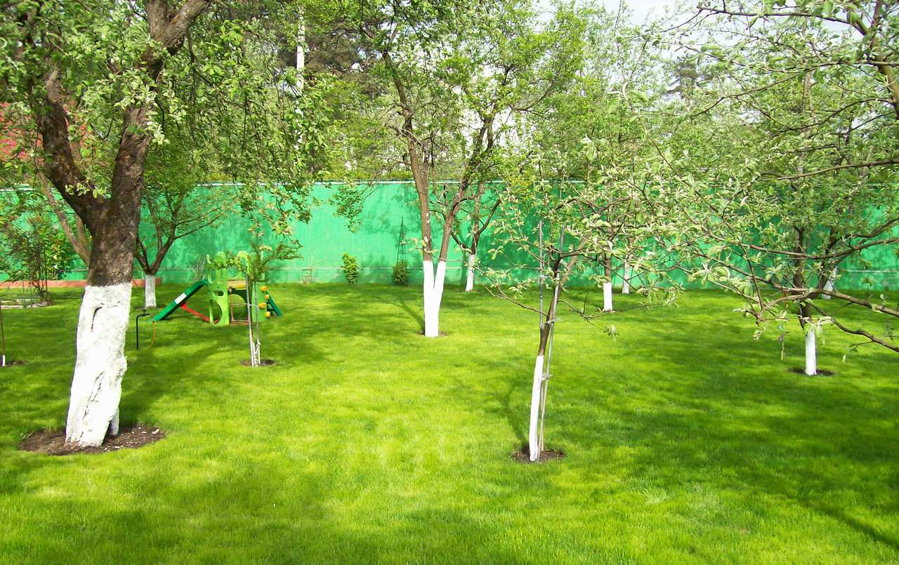В июле деревьям важен качественный полив и подкормки