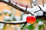 Календарь садовода на ноябрь