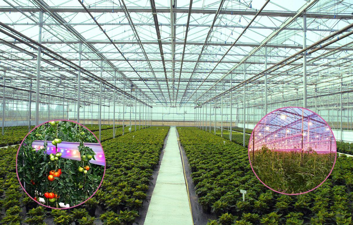В основе этих светильников - светодиоды CREE XLAMP XP-E2, разработанные специально для теплиц и оранжерей