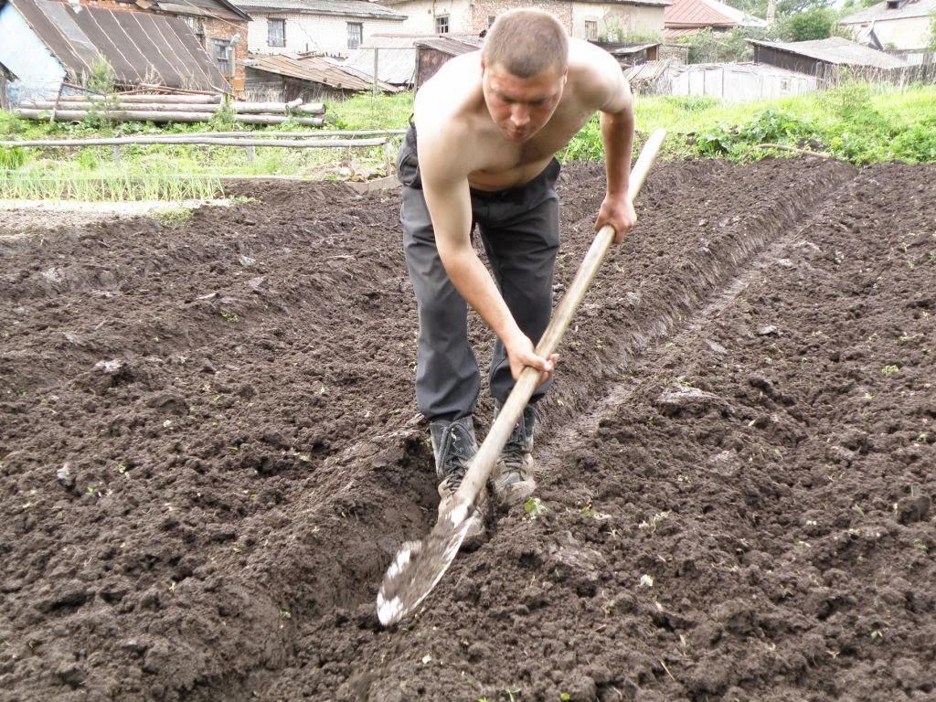 Внесение удобрений при перекопке грунта