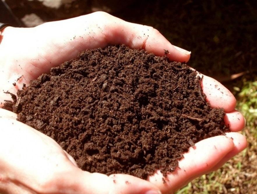 Внимательно подойдите к выбору почвы для рассады перца