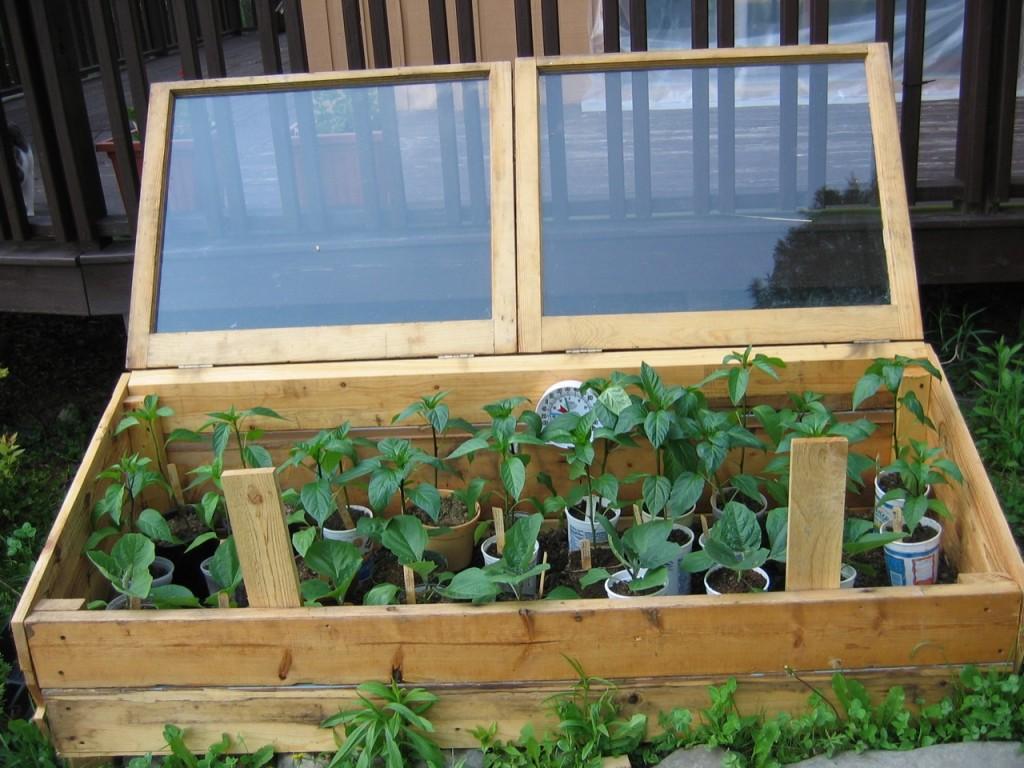 Выращивание перца в деревянном парнике с открывающимся верхом