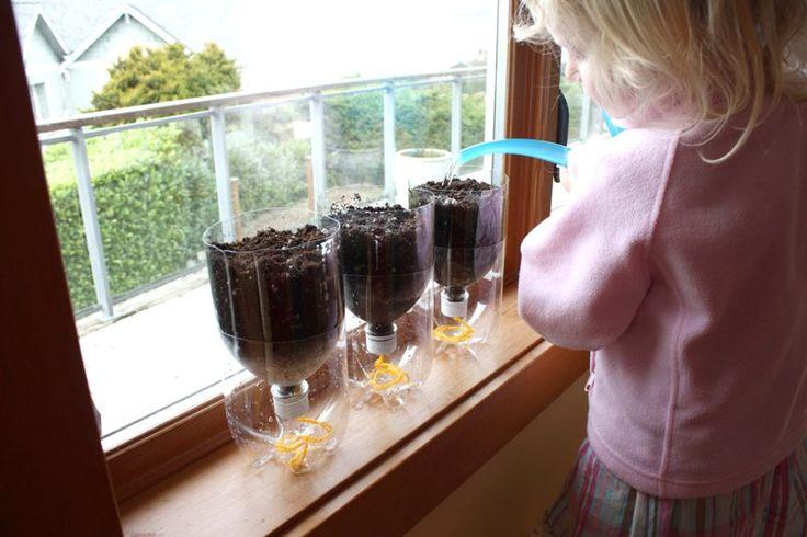 Выращивание рассады в бутылках