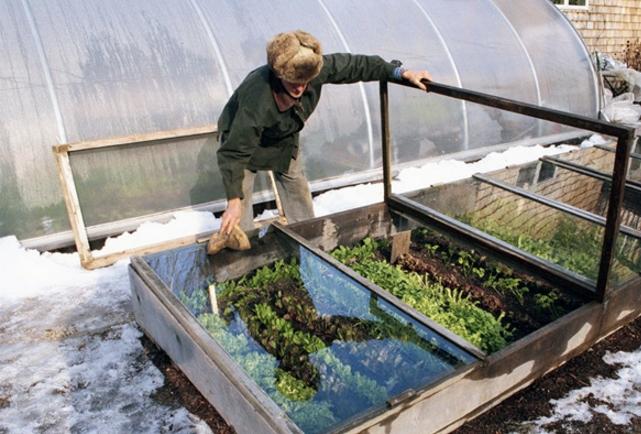 Выращивание рассады в деревянном парнике