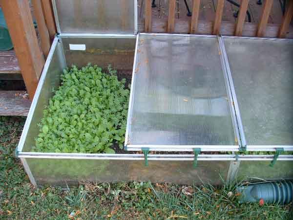 Выращивание зелени в бельгийском парнике