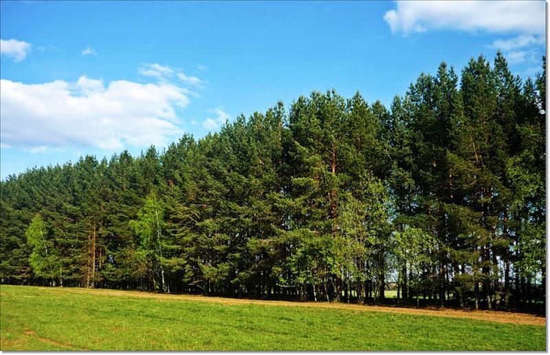 Высаженная с северной границы участка лесополоса способна задержать холодный ветер