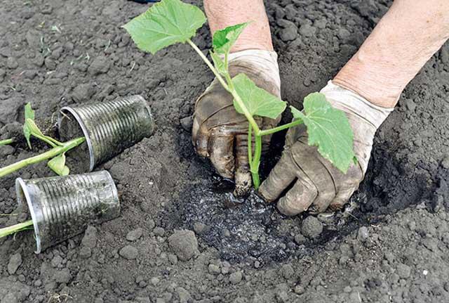 Высаживание растений