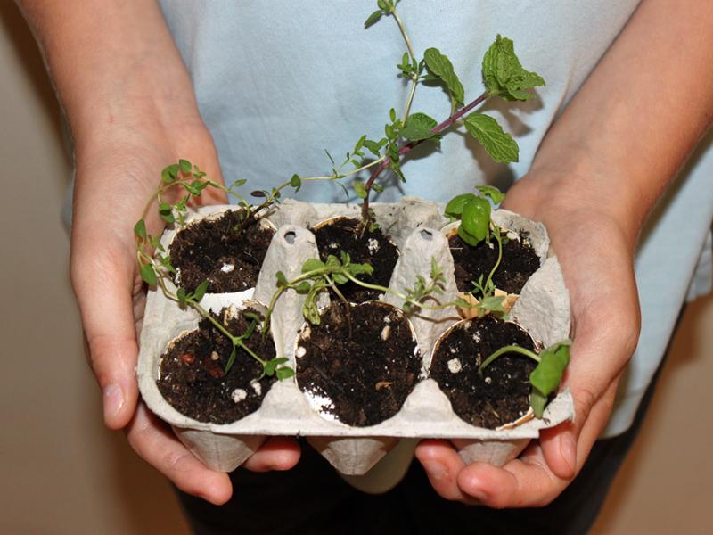 Яичные коробки подойдут для выращивания рассады