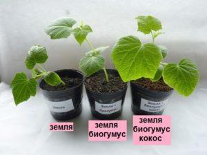 Для выращивания рассады
