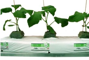 Для комнатных растений