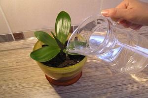 Шаг 3. Подготовка емкости для полива, наполненной водой комнатной температуры