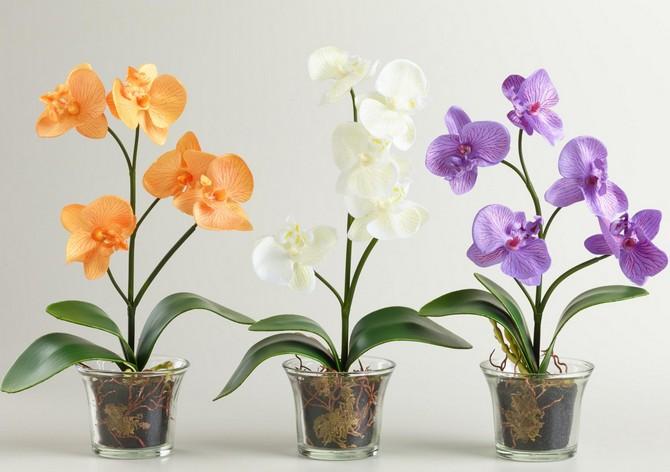 Цветки орхидеи могут быть разного цвета