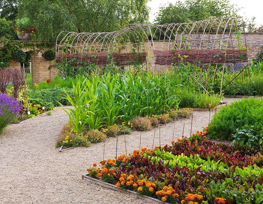 Цветы в дизайне небольшого огорода