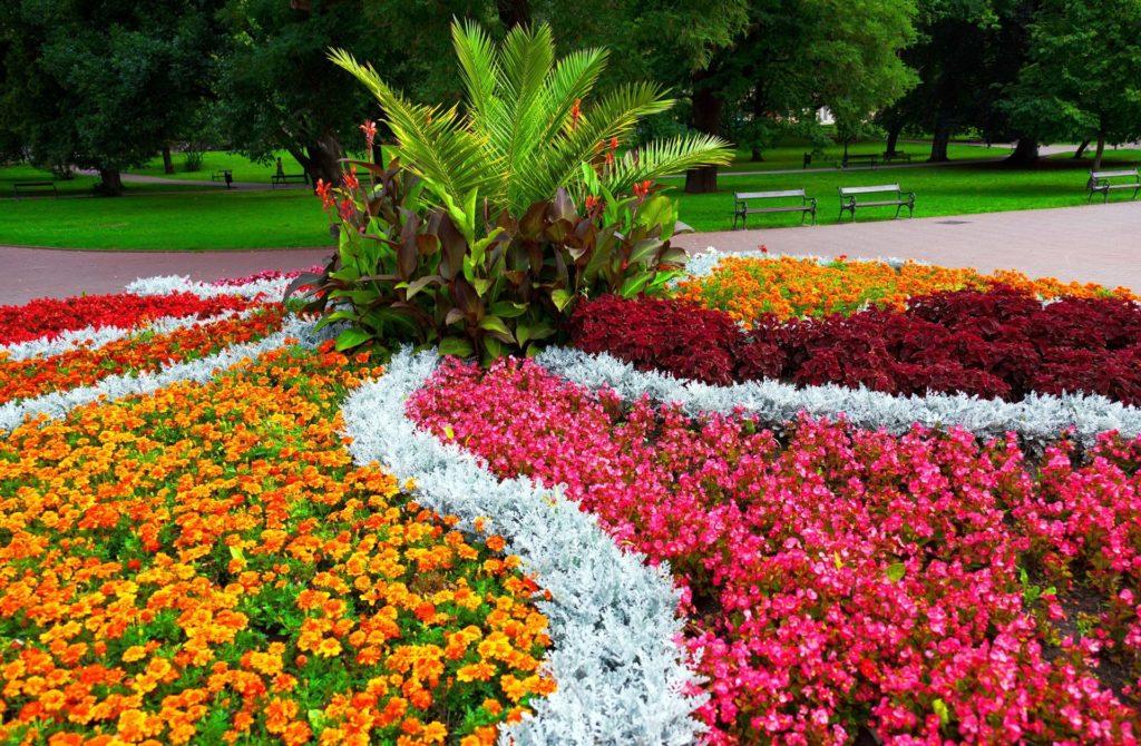 Цветы на клумбах картинки с названием