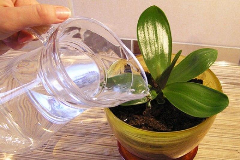 Для орхидей подходит только мягкая вода