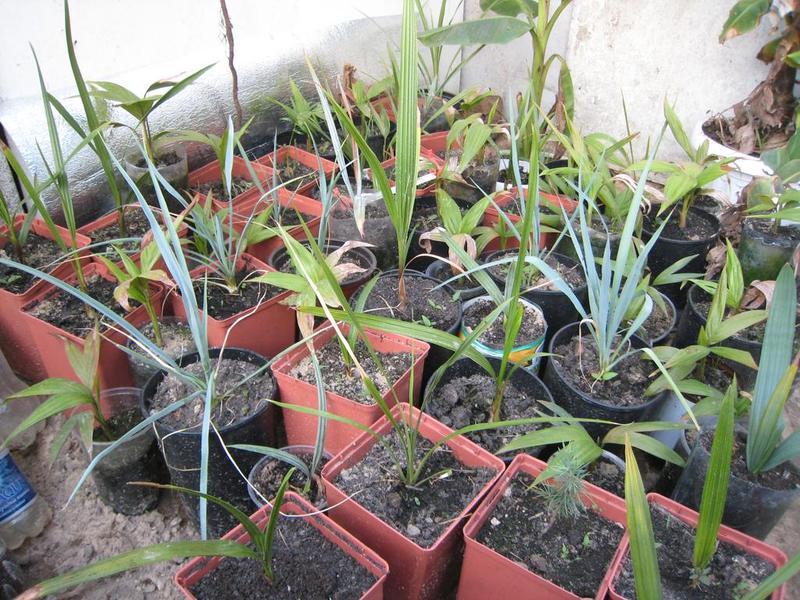 Еще одно фото растений, которые выращиваются в миниатюрной траншейной тепличке