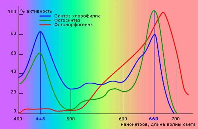 График, иллюстрирующий активность некоторых процессов, происходящих в растениях, в зависимости от длины световой волны